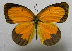 ( - WI-JAG-411)  @15 [ ] No Rights Reserved  Julio A Genaro Caribbean Natural History Group