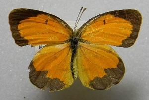 ( - WI-JAG-412)  @14 [ ] No Rights Reserved  Julio A Genaro Caribbean Natural History Group