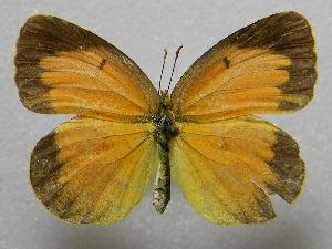 ( - WI-JAG-413)  @14 [ ] No Rights Reserved  Julio A Genaro Caribbean Natural History Group