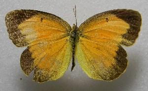 ( - WI-JAG-414)  @15 [ ] No Rights Reserved  Julio A Genaro Caribbean Natural History Group