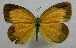 ( - WI-JAG-415)  @14 [ ] No Rights Reserved  Julio A Genaro Caribbean Natural History Group