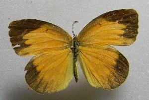 ( - WI-JAG-417)  @14 [ ] No Rights Reserved  Julio A Genaro Caribbean Natural History Group
