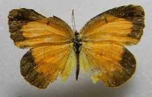 ( - WI-JAG-418)  @14 [ ] No Rights Reserved  Julio A Genaro Caribbean Natural History Group