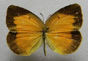( - WI-JAG-419)  @15 [ ] No Rights Reserved  Julio A Genaro Caribbean Natural History Group
