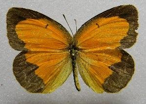( - WI-JAG-421)  @15 [ ] No Rights Reserved  Julio A Genaro Caribbean Natural History Group