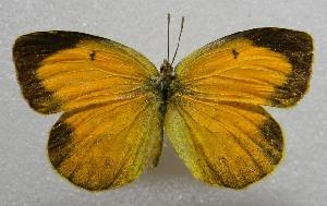 ( - WI-JAG-422)  @11 [ ] No Rights Reserved  Julio A Genaro Caribbean Natural History Group