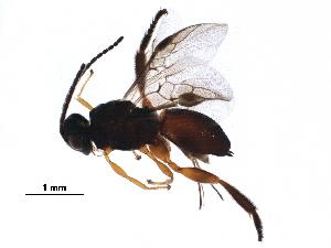 (Acampsohelconinae - BIOUG29832-F12)  @14 [ ] CreativeCommons - Attribution Non-Commercial Share-Alike (2016) CBG Photography Group Centre for Biodiversity Genomics