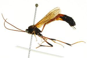 ( - BIOUG01023-F04)  @14 [ ] CC-0 (2011) CBG Photography Group Centre for Biodiversity Genomics
