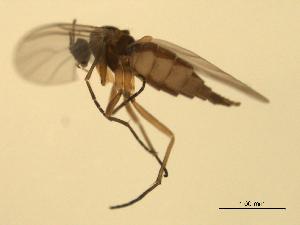 ( - 07PROBE-JW0757)  @12 [ ] CC-0 (2010) CBG Photography Group Centre for Biodiversity Genomics