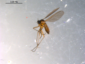 ( - 10PROBE-12045)  @12 [ ] CC-0 (2011) CBG Photography Group Centre for Biodiversity Genomics