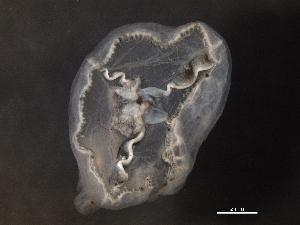 (Hydrozoa - L#12BBAY-0012-01)  @14 [ ] No Rights Reserved (2013) Kathryn Hotke Centre for Biodiversity Genomics