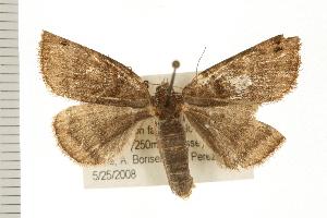 ( - 08OEC-028)  @14 [ ] CC-0 (2008) CBG Photography Group Centre for Biodiversity Genomics