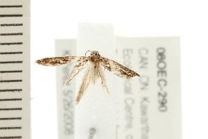 ( - 08OEC-290)  @12 [ ] CC-0 (2008) CBG Photography Group Centre for Biodiversity Genomics