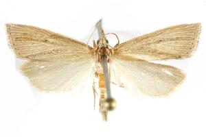 ( - BIOUG24423-E08)  @12 [ ] CreativeCommons - Attribution Non-Commercial Share-Alike (2015) CBG Photography Group Centre for Biodiversity Genomics
