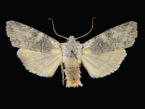 ( - KSLEP1013-17)  @11 [ ] Copyright (2017) Kenneth H Stead Canadian National Collection of Insects, Arachnids and Nematodes