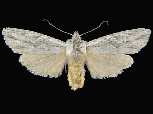 ( - KSLEP1015-17)  @11 [ ] Copyright (2017) Kenneth H Stead Canadian National Collection of Insects, Arachnids and Nematodes