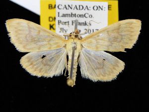 ( - KSLEP1109)  @11 [ ] Copyright (2017) Kenneth H Stead Canadian National Collection of Insects, Arachnids and Nematodes