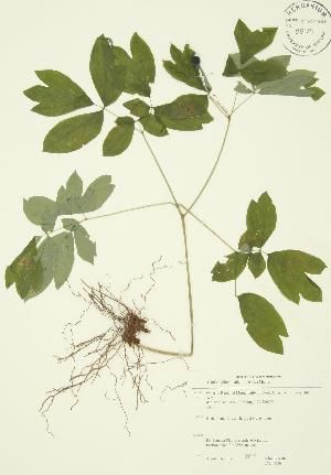 ( - JAG 0030)  @11 [ ] Copyright (2009) Steven Newmaster University of Guelph BIO Herbarium