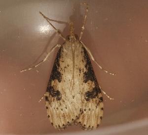 ( - AVBC 1238-11)  @12 [ ] CC-0 (2012) CBG Photography Group Centre for Biodiversity Genomics
