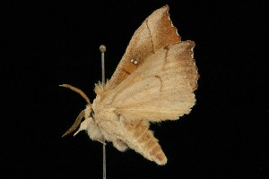 ( - HLC-20966)  @14 [ ] CC-0 (2010) CBG Photography Group Centre for Biodiversity Genomics