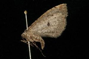 ( - HLC-21303)  @12 [ ] CC-0 (2010) CBG Photography Group Centre for Biodiversity Genomics