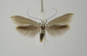 ( - BC KS 00013)  @13 [ ] CreativeCommons - Attribution Non-Commercial (2010) Matthias Nuss Senckenberg Museum of Zoology, Dresden