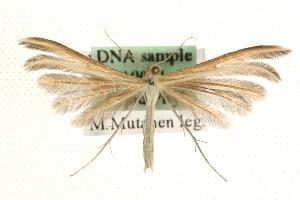 (Merrifieldia - MM10051)  @15 [ ] CreativeCommons - Attribution Non-Commercial Share-Alike (2010) CBG Photography Group Centre for Biodiversity Genomics