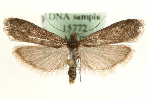 (Episcythrastis - MM15772)  @15 [ ] CreativeCommons - Attribution Non-Commercial Share-Alike (2010) CBG Photography Group Centre for Biodiversity Genomics