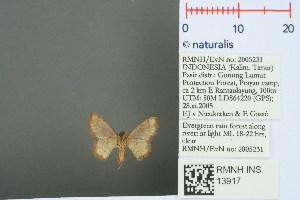 (Idaea craspedota - RMNH.INS.13917)  @13 [ ] Unspecified (default): All Rights Reserved  Unspecified Unspecified