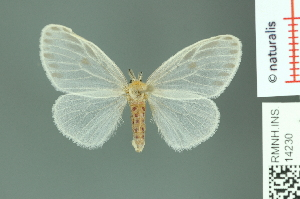 (Pantana macrotera - RMNH.INS.14230)  @14 [ ] Unspecified (default): All Rights Reserved  Unspecified Unspecified