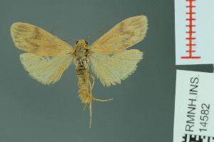(Teulisna nebulosa - RMNH.INS.14582)  @14 [ ] Unspecified (default): All Rights Reserved  Unspecified Unspecified
