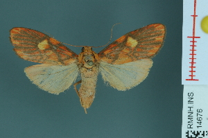 (Barsine roseororatus - RMNH.INS.14676)  @14 [ ] Unspecified (default): All Rights Reserved  Unspecified Unspecified