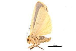 (Brunia sarawaca - BIOUG10081-F12)  @12 [ ] CreativeCommons - Attribution Non-Commercial Share-Alike (2014) CBG Photography Group Centre for Biodiversity Genomics