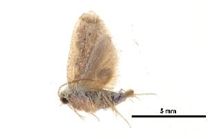 (Diduga ciliata - BIOUG14383-C02)  @13 [ ] CreativeCommons - Attribution Non-Commercial Share-Alike (2014) CBG Photography Group Centre for Biodiversity Genomics