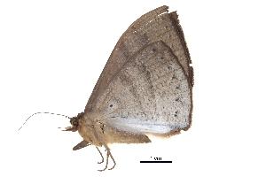 (Lygniodes endoleucus - BIOUG13574-E12)  @12 [ ] CreativeCommons - Attribution Non-Commercial Share-Alike (2014) CBG Photography Group Centre for Biodiversity Genomics
