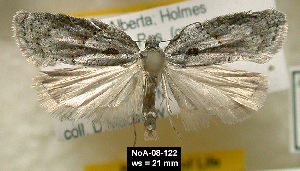 (Acleris hastiana - NoA-08-122)  @15 [ ] Unspecified (default): All Rights Reserved  Unspecified Unspecified