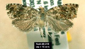 (Olethreutes rusticanum - NoA-08-315)  @13 [ ] Unspecified (default): All Rights Reserved  Unspecified Unspecified