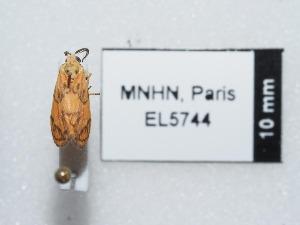 ( - EL5744)  @12 [ ] CreativeCommons - Attribution (2015) Rodolphe Rougerie Muséum national d'Histoire Naturelle, Paris