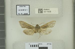 ( - RMNH.5011605)  @11 [ ] CreativeCommons-Attribution Non-Commercial Share-Alike (2018) B. Gravendeel Naturalis Biodiversity Center