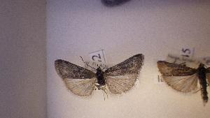( - LepVM358)  @12 [ ] CreativeCommons - Attribution Non-Commercial Share-Alike (2014) NTNU University Museum, Department of Natural History NTNU University Museum, Department of Natural History