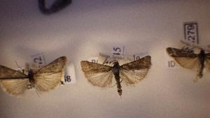 ( - LepVM359)  @12 [ ] CreativeCommons - Attribution Non-Commercial Share-Alike (2014) NTNU University Museum, Department of Natural History NTNU University Museum, Department of Natural History
