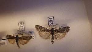 ( - LepVM361)  @11 [ ] CreativeCommons - Attribution Non-Commercial Share-Alike (2014) NTNU University Museum, Department of Natural History NTNU University Museum, Department of Natural History