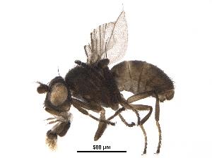 (Hydrelliinae - BIOUG36874-B10)  @15 [ ] CreativeCommons - Attribution Non-Commercial Share-Alike (2018) CBG Photography Group Centre for Biodiversity Genomics