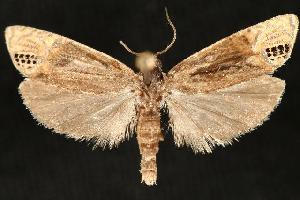 (Eucosma autumnana - DNA-ATBI-6497)  @14 [ ] CreativeCommons - Attribution Non-Commercial Share-Alike (2010) CBG Photography Group Centre for Biodiversity Genomics