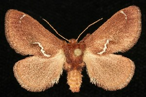 ( - DLW0511046)  @14 [ ] CreativeCommons - Attribution Non-Commercial Share-Alike (2010) CBG Photography Group Centre for Biodiversity Genomics