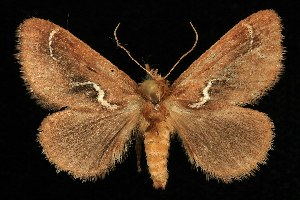 ( - DLW0511047)  @14 [ ] CreativeCommons - Attribution Non-Commercial Share-Alike (2010) CBG Photography Group Centre for Biodiversity Genomics