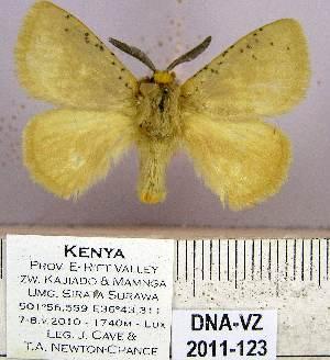 (Erythropteryx - DNA-VZ2011-123)  @13 [ ] Unspecified (default): All Rights Reserved  Unspecified Unspecified