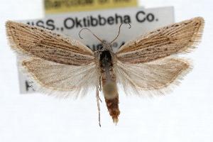(Eucosma ambodaidaleia - RBMIS-1495)  @14 [ ] CreativeCommons - Attribution Non-Commercial Share-Alike (2010) CBG Photography Group Centre for Biodiversity Genomics