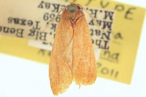 (Amorbimorpha - BIOUG05318-H12)  @11 [ ] CreativeCommons - Attribution Non-Commercial Share-Alike (2013) BIO Photography Group/CNC Centre for Biodiversity Genomics