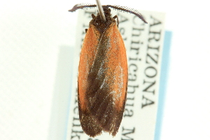 (Tetraclonia latercula - CCDB-19576-H02)  @12 [ ] CreativeCommons - Attribution Non-Commercial Share-Alike (2012) CBG Photography Group Centre for Biodiversity Genomics